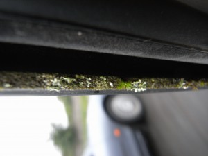 Our car is so eco-friendly, it grows lichen